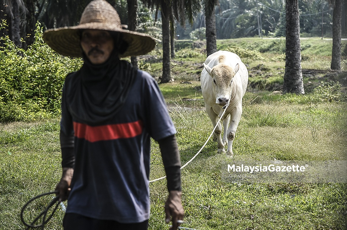 MGF16082018_HUMAN INTEREST PERSIAPAN RAYA KORBAN45